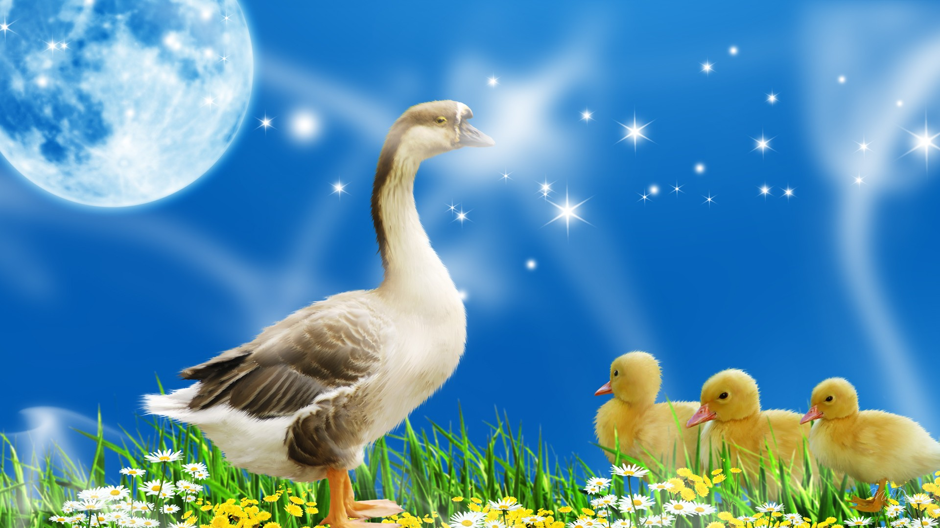 New jersey week for the animals - Animal and bird hd wallpaper ...